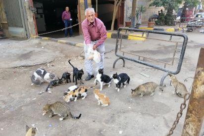 العم وليم صديق قطط الشوارع