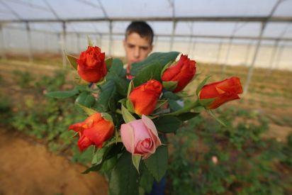 وداعا للزهور في غزة... وأهلا بالخضروات